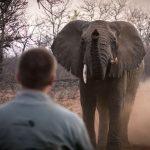 Mit und in der Natur lernen – Rangerausbildung in Südafrika